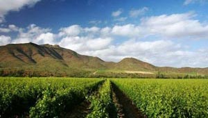 western cape garden route guided tour 3